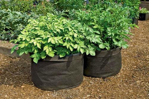 Выращивание-картофеля-в-мешках (500x332, 255Kb)