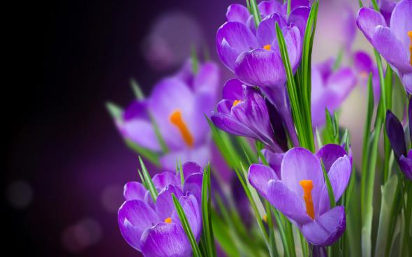 цветы (590x368, 158Kb)