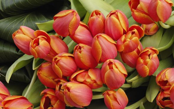 цветы 4 (590x368, 206Kb)