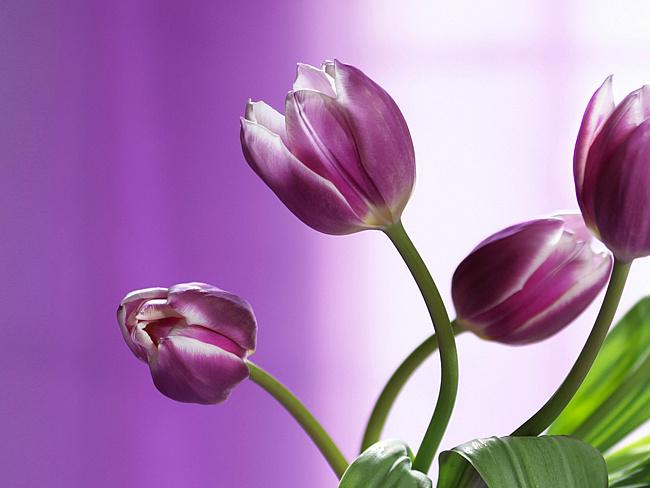 цветы 16 (650x488, 228Kb)