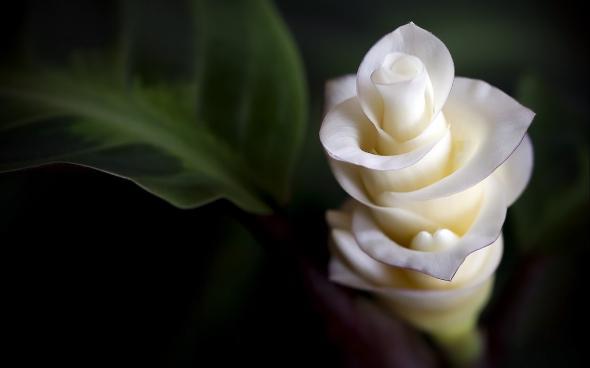 цветы 10 (590x368, 74Kb)