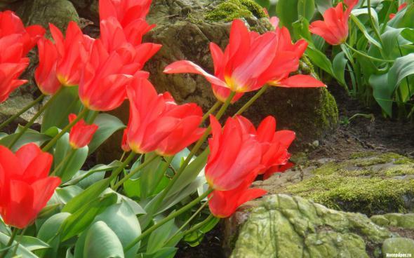 цветы 8 (590x368, 224Kb)