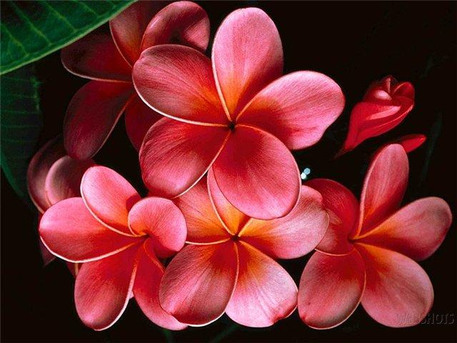 цветы 17 (640x480, 256Kb)