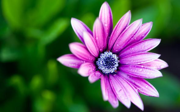 цветы 5 (590x368, 172Kb)