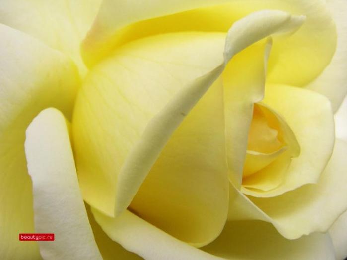 цветы 13 (700x524, 217Kb)