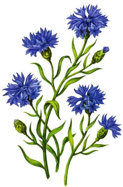 Цветочки для оформления картинки