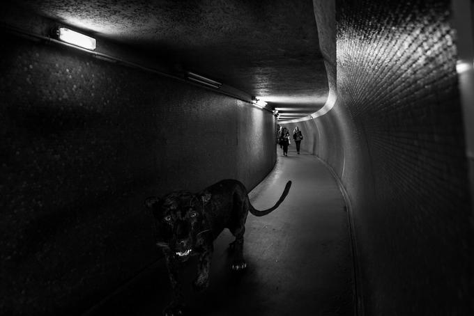 черно белые фото животных 11 (680x454, 164Kb)