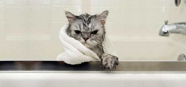 мокрые кошки фото 3 (650x306, 102Kb)