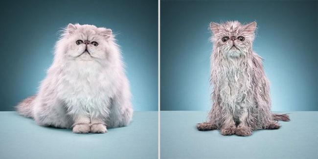 мокрые кошки фото 7 (650x325, 131Kb)