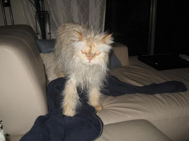 мокрые кошки фото 11 (650x487, 193Kb)
