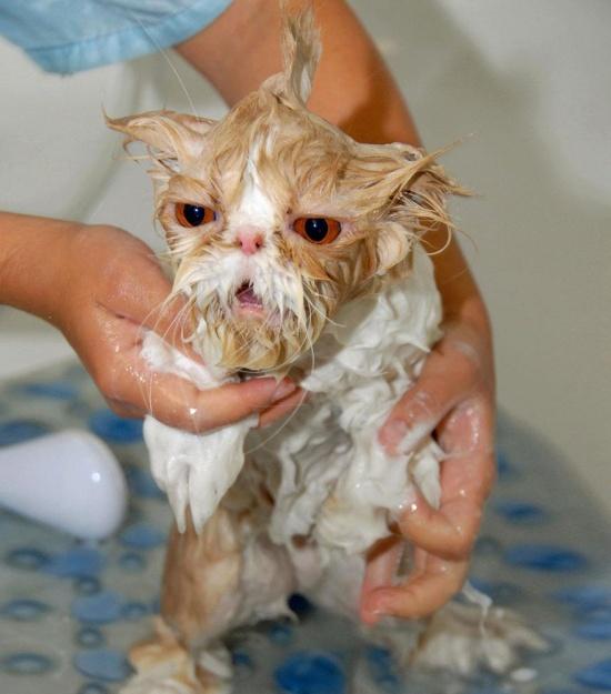 мокрые кошки фото 14 (550x625, 254Kb)