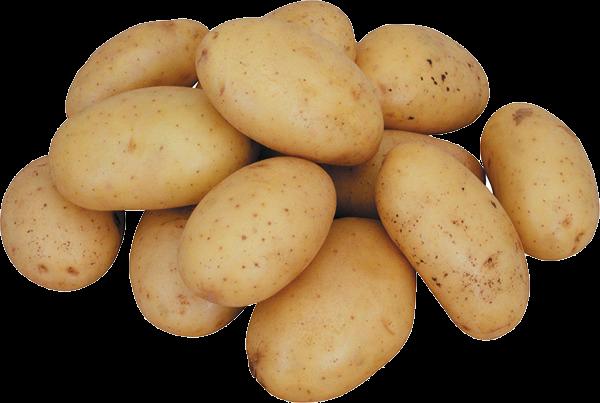 5177462_1329301671_poster_potato45 (600x403, 378Kb)