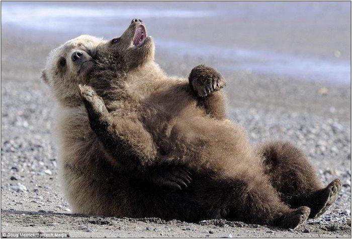 медвежата4