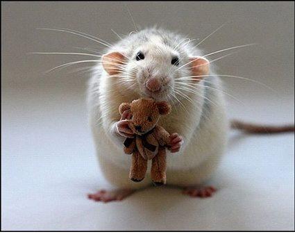 картинки с маленькими животными: