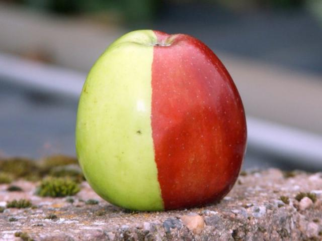 5320643_2colorapple (640x480, 30Kb)