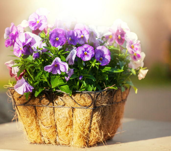 flowers_in_basket_24 (700x619, 515Kb)