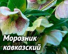 5590236_dc_1_ (224x177, 26Kb)