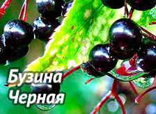 5590236_byzinachernaya_3_ (224x164, 34Kb)