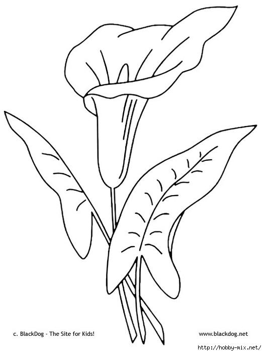 flower10 (525x700, 104Kb)