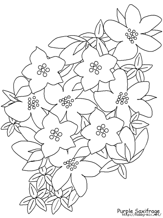 printable-purplesaxifrage-flowers-coloring-pages-book-best-quality (525x700, 179Kb)