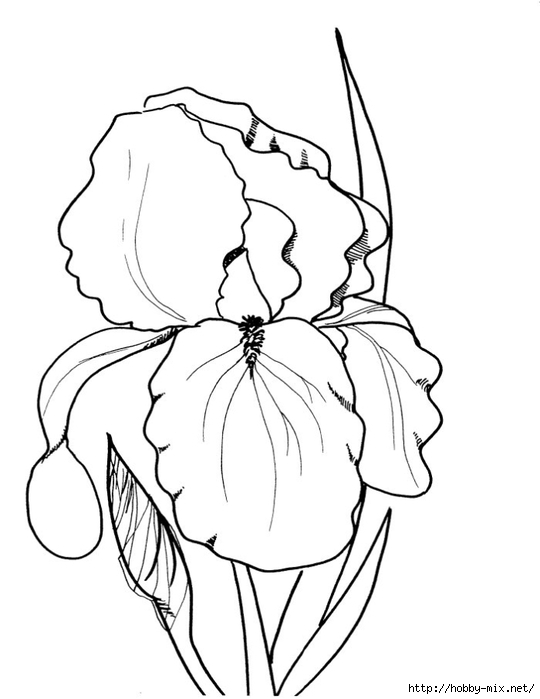 flower-coloring-sheet (540x700, 114Kb)