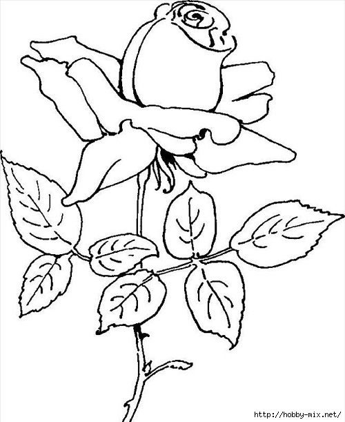 beautiful-rose-flower-coloring-pages-for-kids-best-quality (500x611, 139Kb)