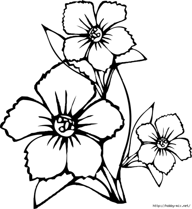 flower-coloring-pages-to-print-page-944x1024 (645x700, 157Kb)