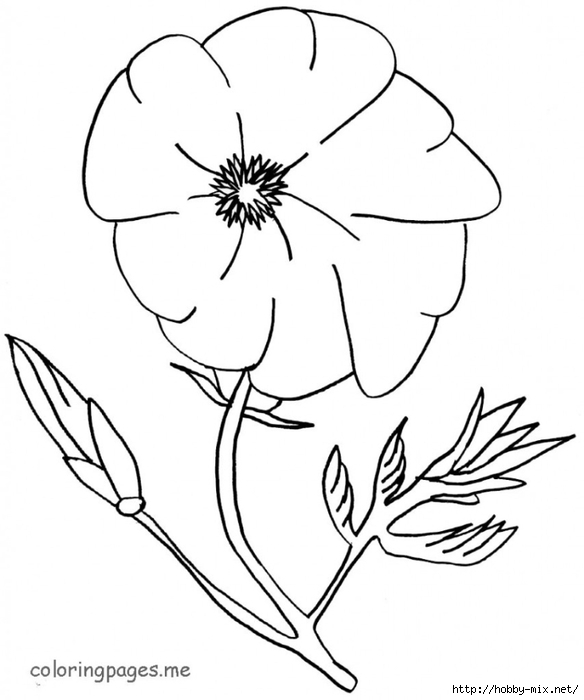 thanksgiving-poppy-coloring-page (584x700, 127Kb)
