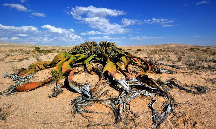 реликтовые растения фото 3 (700x417, 475Kb)
