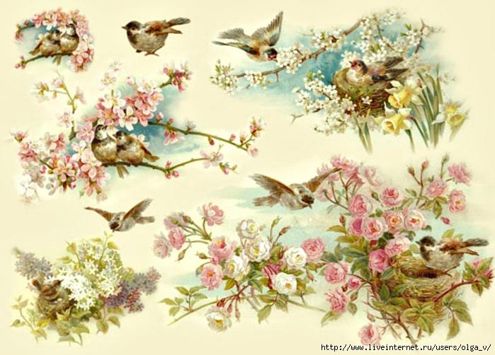 DFS145-ptichki-roses-persik (700x502, 273Kb)