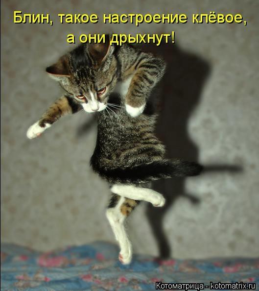 kotomatritsa_ch (529x594, 103Kb)