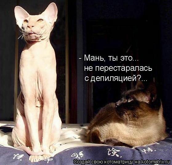 kotomatritsa_cy (559x536, 117Kb)