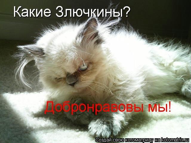 kotomatritsa_kW (640x480, 136Kb)