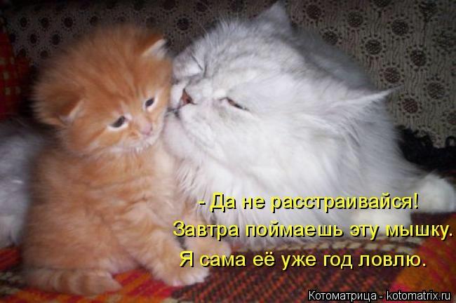 kotomatritsa_S (650x432, 113Kb)