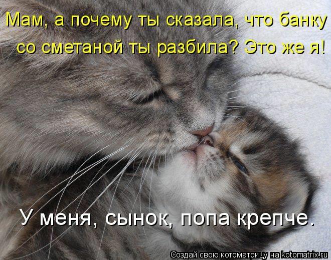 kotomatritsa_U9 (660x519, 225Kb)