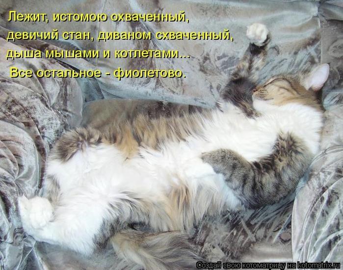 kotomatritsa_x- (700x550, 305Kb)