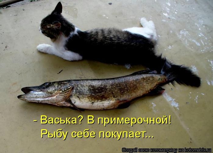 kotomatritsa_YI (700x504, 221Kb)