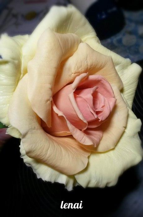 роза.jpg1 (460x700, 44Kb)