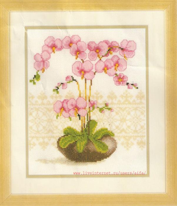 Вышивка крестом, схемы Орхидеи
