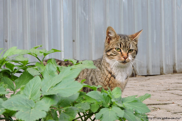 Котик (11) (700x466, 242Kb)