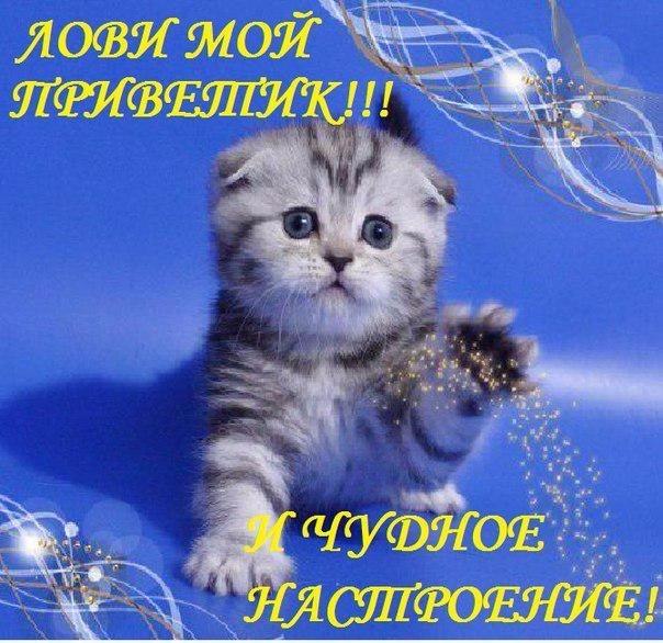Зимний приветик!.jpg1.jpg1 (604x586, 369Kb)