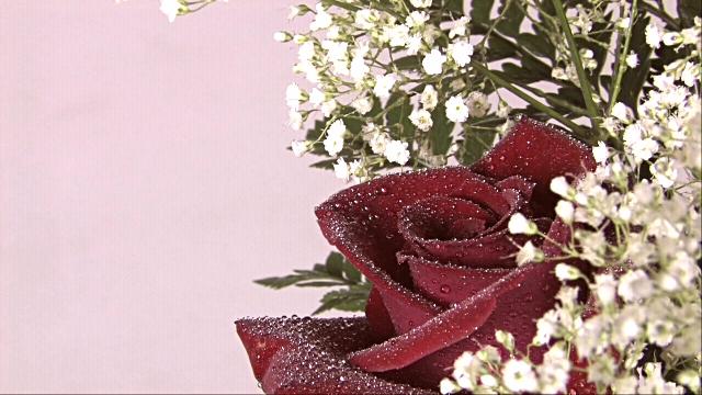 Роза с капельками росы и дождя3а (640x360, 295Kb)