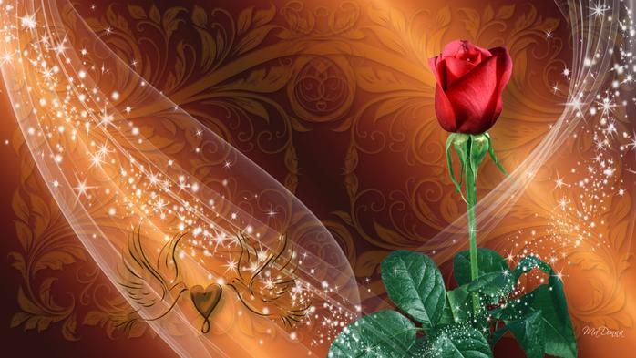 Роза с капельками росы и дождя18 (700x393, 377Kb)