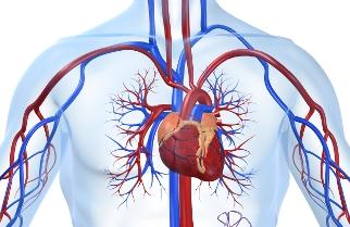 3407372_heart (322x209, 60Kb)