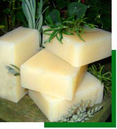 shampunevoe-milo (241x266, 51Kb)