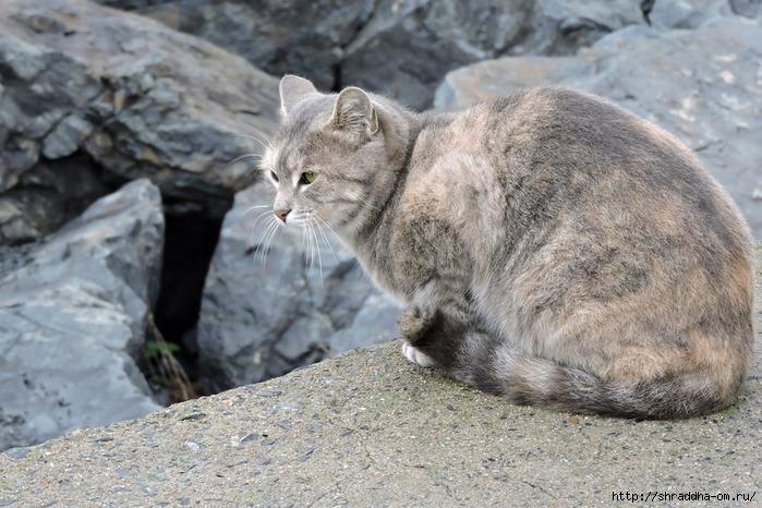 Котик (9) (700x466, 276Kb)