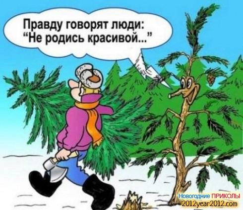 Не родись красивой. Срубленная новогодняя елка./3241858_novogodniizimnii7047 (490x425, 72Kb)