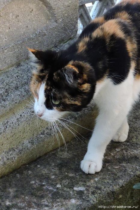 Котик (19) (466x700, 280Kb)