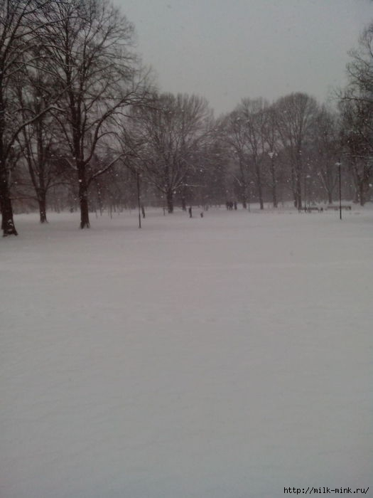 снег в Риге (525x700, 104Kb)