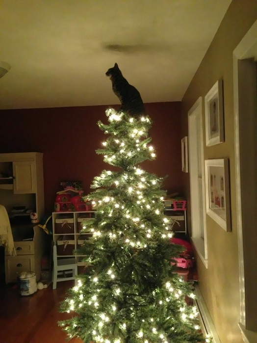 decorating-cats-destroying-trees-christmas-492__605 (524x700, 239Kb)